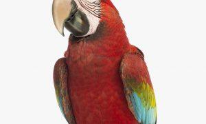 bird-food-dogloverszw